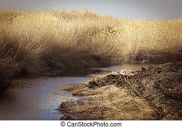 beautiful river with reeds in the autumn