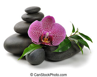 Orchid - Pink orchid and stones on the white background