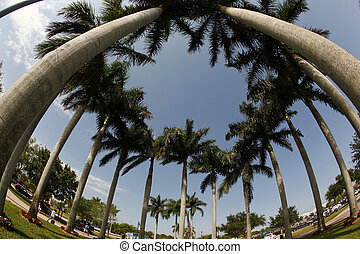 Palm Trees - Palm trees photographed with a fisheye lens