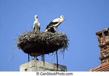 Zoology - white storks in nest on roof top in Burgenland,...