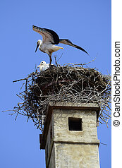 Zoology - white storks in bird nest on roof in the village...