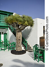Lanzarote, Spain, restaurant - bodega - in traditional white...