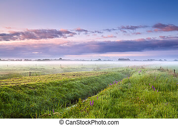 summer misty morning over meadows - summer misty morning...