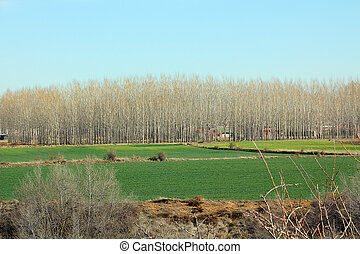 meadow landscape with trees in the background