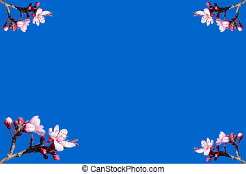 Spring blooming frame or postcard against blue sky - Blank...
