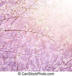 Blooming fruit tree - Gentle white flowers on fruit tree...