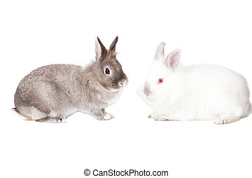 Two cute Easter bunnies in profile - Two cute cuddly fluffy...