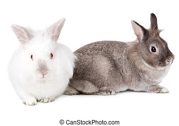 Two friendly little Easter bunnies sitting side by side with...