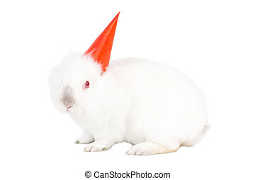Lovable white bunny rabbit in a party hat - Lovable white...
