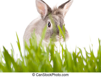 Cute little Easter rabbit on fresh green grass - Cute little...
