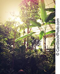 Sunlight in jungle room - Sunlit jungle room in conservatory