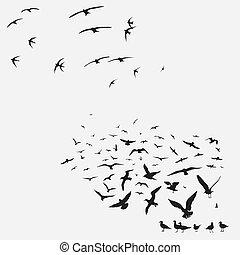 pacote, gaivotas, andorinhas