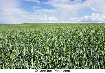weat field 06