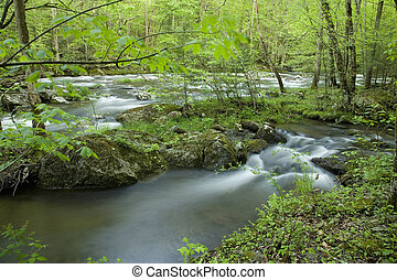 Tremont, Great Smoky Mtns NP, TN - Middle Prong, Little...