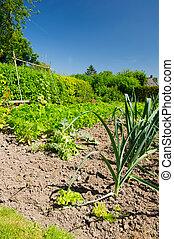 Vegetable garden in the summer