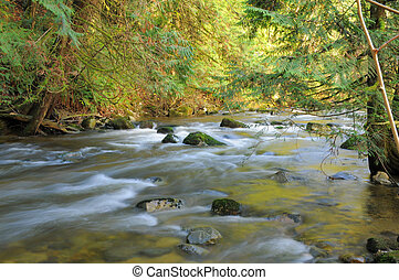 resting place - flowing creek surrounded by trees
