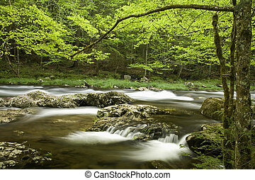 Tremont, Great Smoky Mtns NP, TN - Little River, Tremont,...