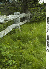 Tree, Grass and Wooden Fence, Carvers Gap, TN-NC - Tree,...