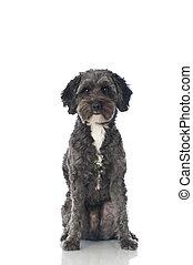 Mixed breed dog - Dog isolated on white