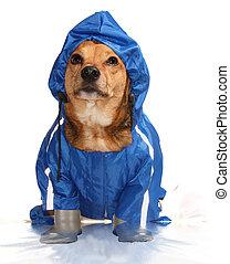 bathroom dog - the blue rain dog in the bathroom