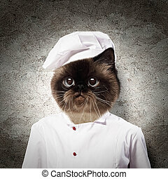 Funny fluffy cat cook in a robe . collage