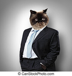 Funny fluffy cat in a business suit businessman collage