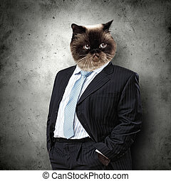 Funny fluffy cat in a business suit businessman. collage