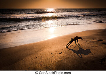 Concept idea of dog yoga Dog in yoga position Urdhva Mukha...