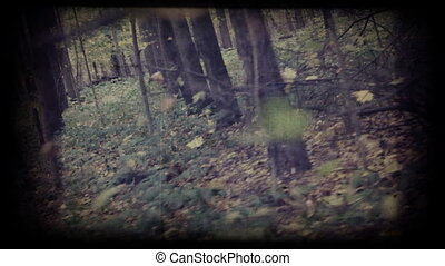 camera moves through autumn woods