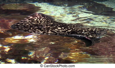 Marine life - Stingrays are a group of rays, which are...