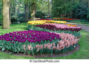 spring garden - A view of a park full of flowers