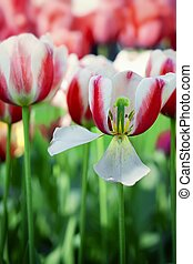 Detail color tulips with beauty blur background