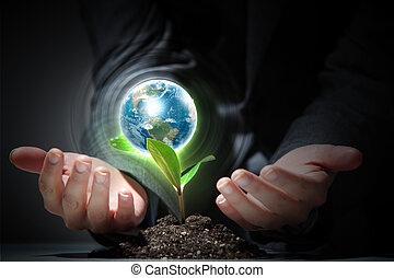 green plant on earth - hands, the young sprout and our...