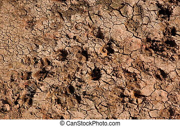 Dry mud road.