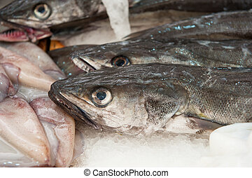 fresh hake at a fish market