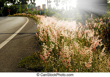 flower grass with sunset.