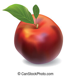 vector nectarine isolated on white background - red vector...