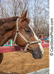 Horse portrait in spring in the paddock