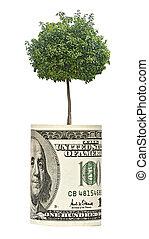 árvore, crescendo, dólar, conta