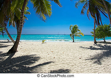 beach - beautiful beach and tropical sea