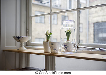 Houseplants on an apartment counter - Houseplants in...