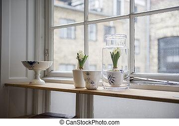 Szobanövények, szoba, pult