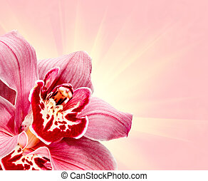 Purple Orchid Flower frame with soft light pink background