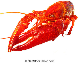 Closup of crawfish isolated - Close up of crawfish isolated...