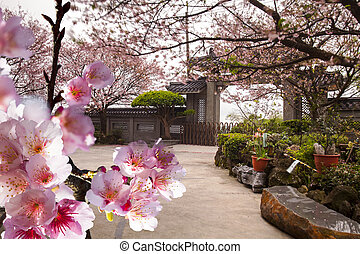Temple with nice sakura for adv or others purpose use