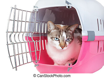 Cute cat sitting home watching from the cell. On a white...