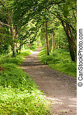 Footpath in the forest - Beautiful sunny forest with sunbeam...