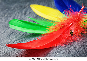 Colorful feathers on stone surface