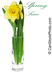 Beautiful spring flower in vase: yellow narcissus Daffodil...