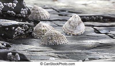stepcones - Wet surface of a rock in low tide coastline,...